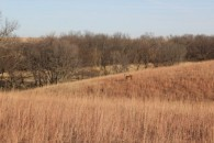 $ 0 - Butler County, KS - LAND AUCTION! at 7755 Southeast Munson Hill Road, Leon, KS 67074, USA for $ 0
