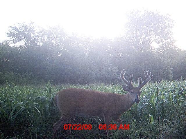 Kansas Deer Hunting Land For Sale - Sundgren Realty Inc
