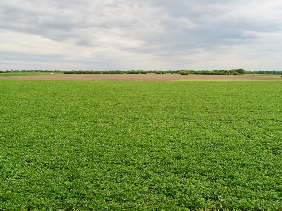 80+- Acres Harvey County Kansas Land For Sale East Of Newton