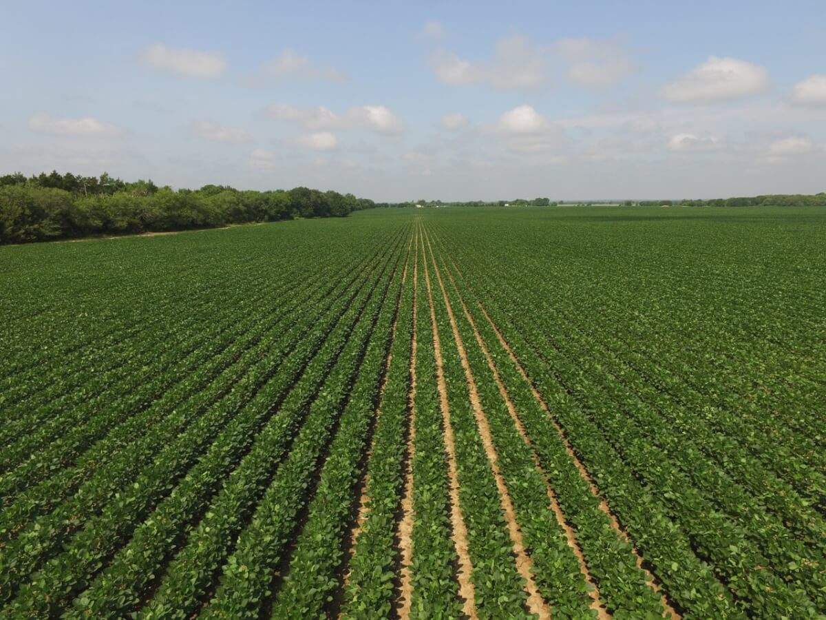 130.5+- Acres Butler County, Kansas Tillable Land For Sale