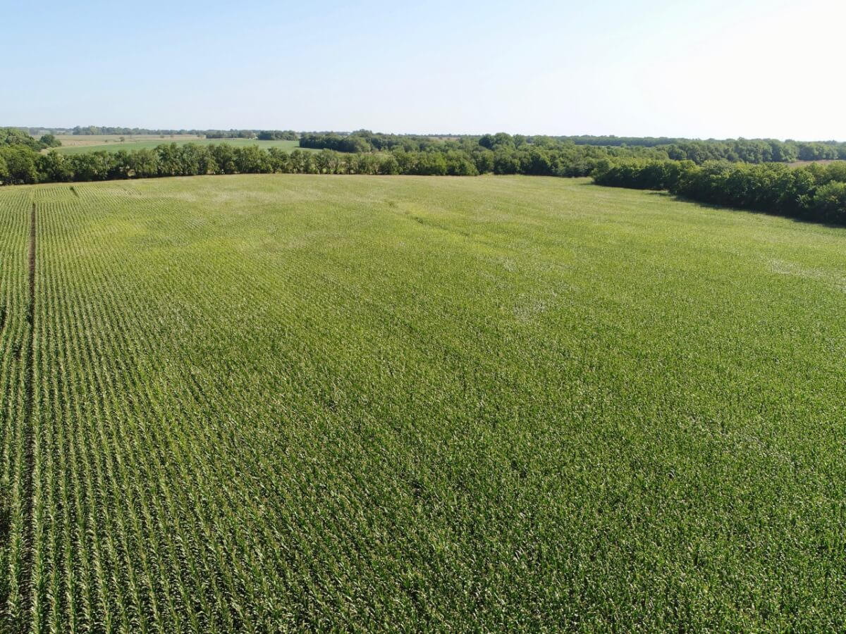 70+- Acres Tillable & Timber Land For Sale Near Rose Hill Kansas