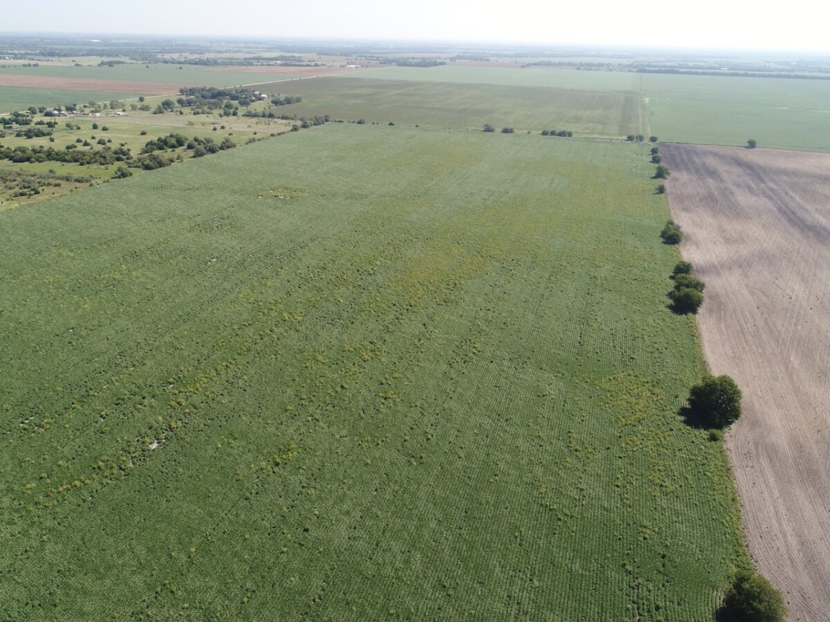 80+- Acres Sedgwick County Kansas Tillable Land For Sale