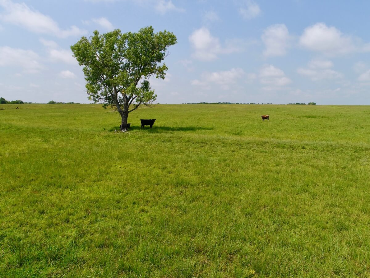76.6+- Acres Prime Pasture & Hay Meadow Near Eureka