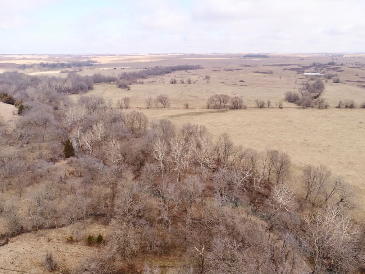 Bowman Trust Tract 4 – 304+- Acres Native Flint Hills Pasture, Goose Creek, Deer & Turkey Hunting