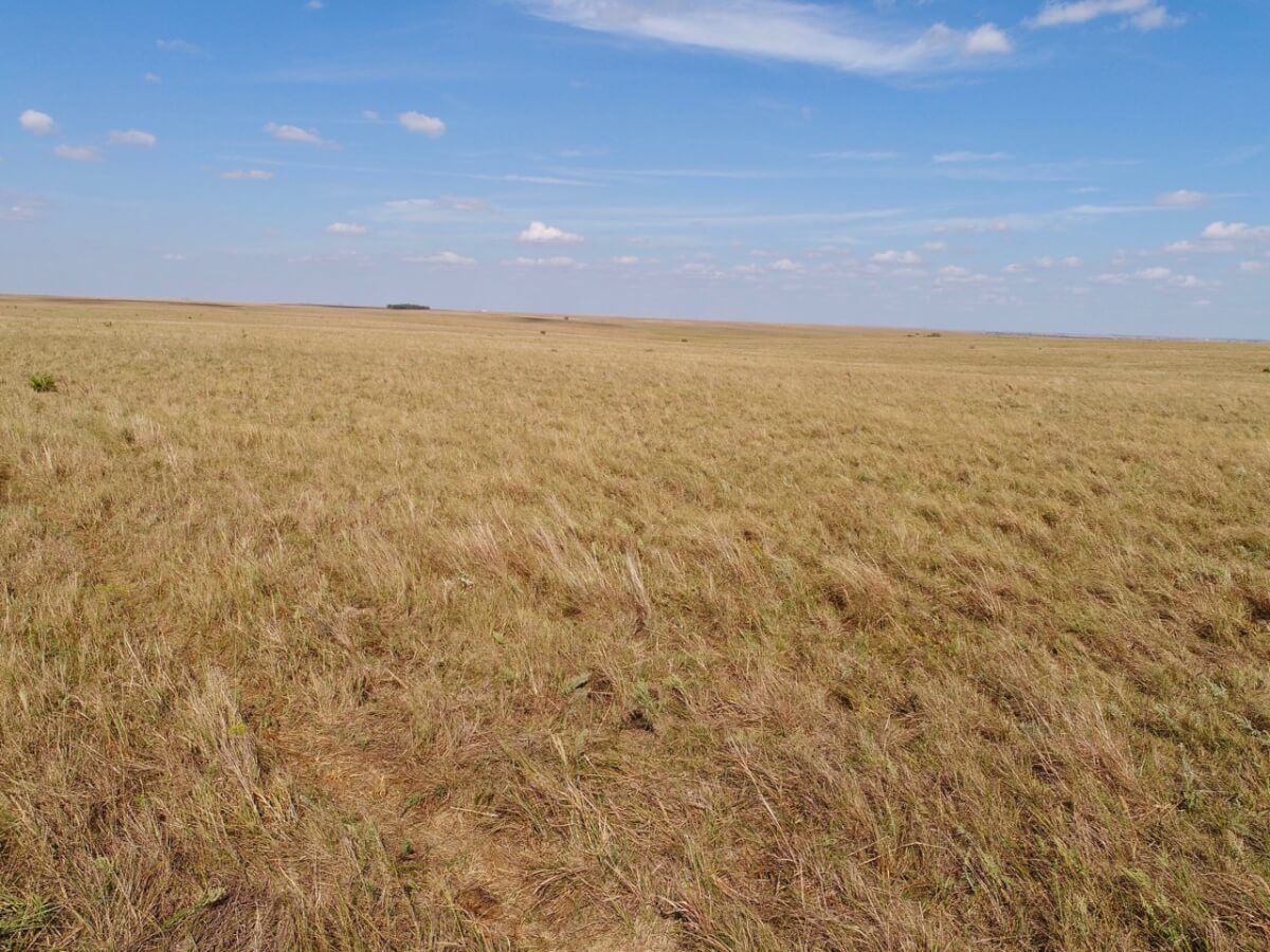 163+- Acres Flint Hills Pasture For Sale, Marion County Kansas Near Burns