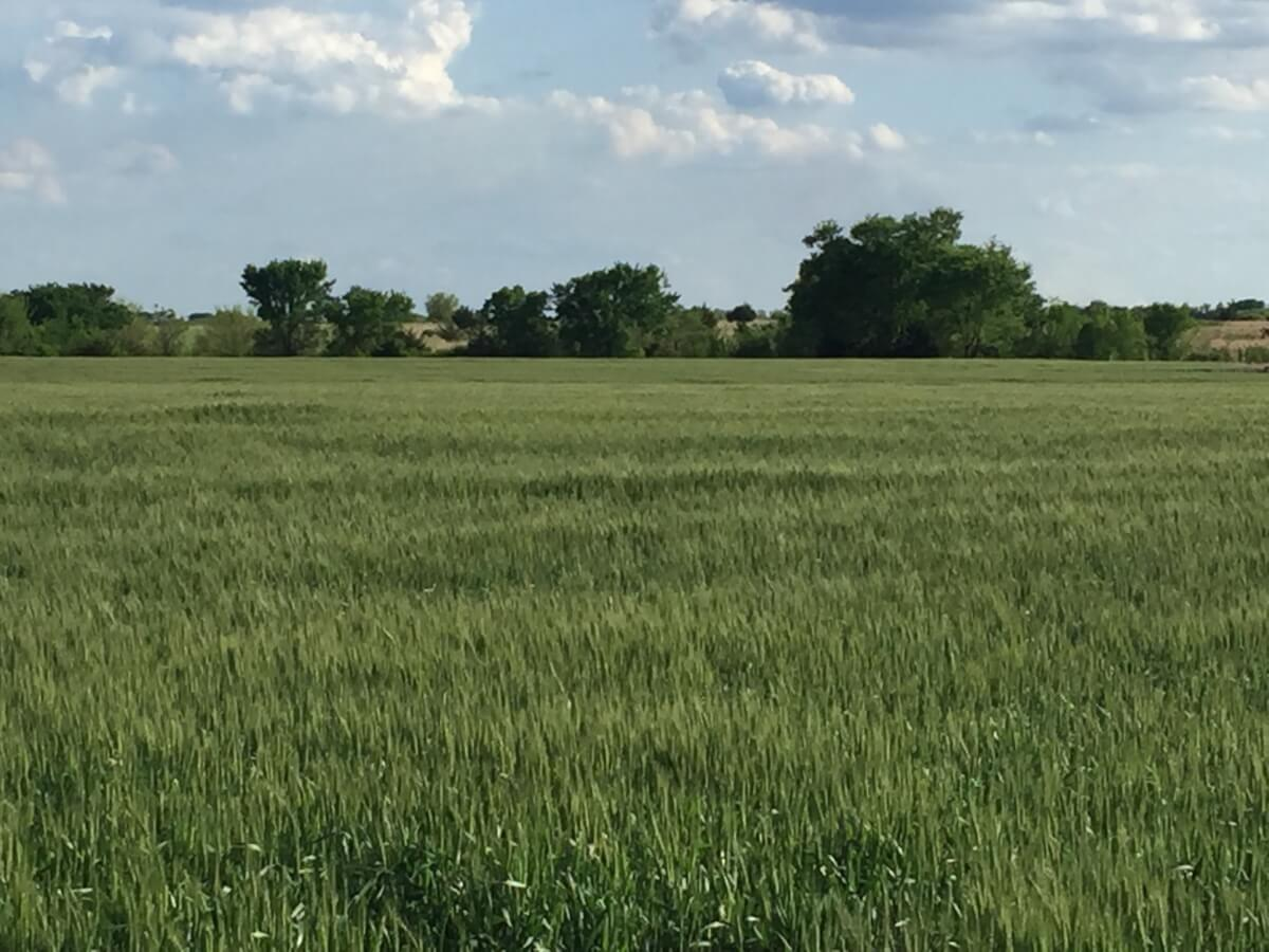 40 Acres Butler County Kansas Tillable & Pasture Land For Sale