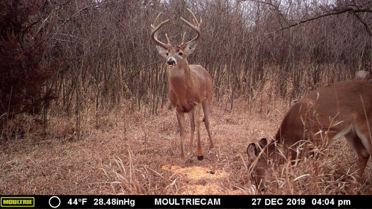 153.7 Acres Marion County Kansas Whitetail Deer Hunting Land
